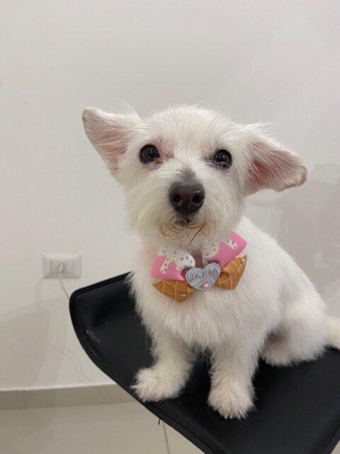 dog fashion blogger spa per cani