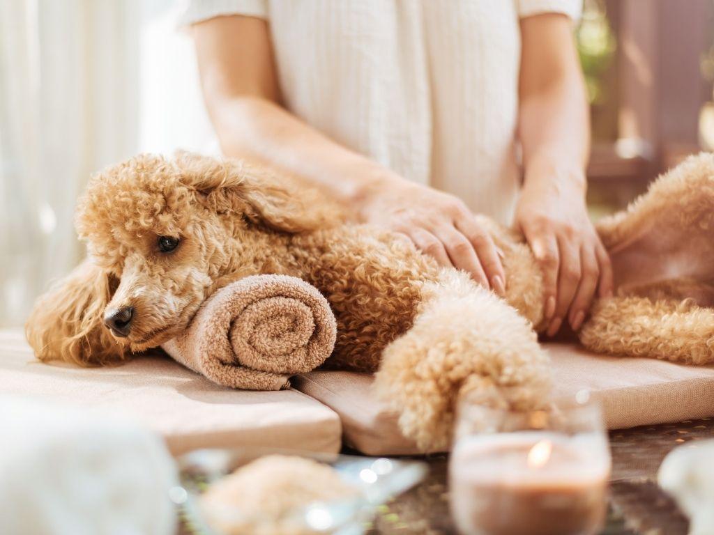 spa per cani milano
